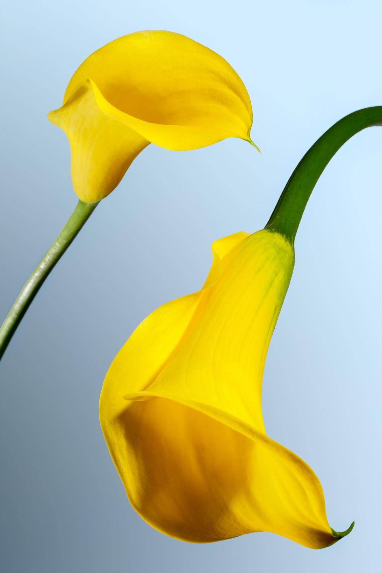 Vincent Chatelet Flowers